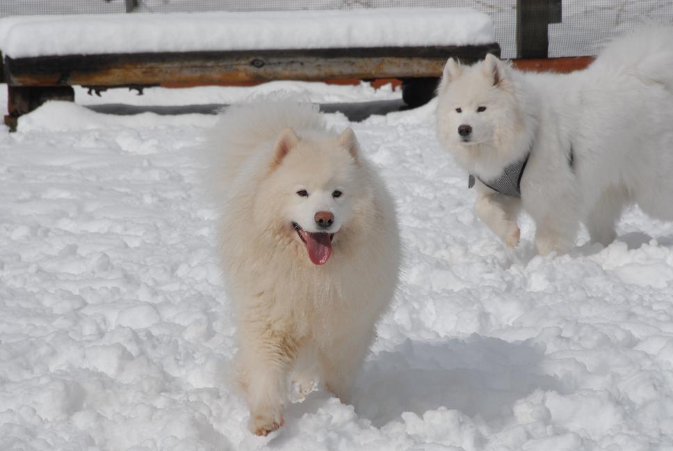 雪解け&大雪オフ  大雪編_a0049296_528166.jpg