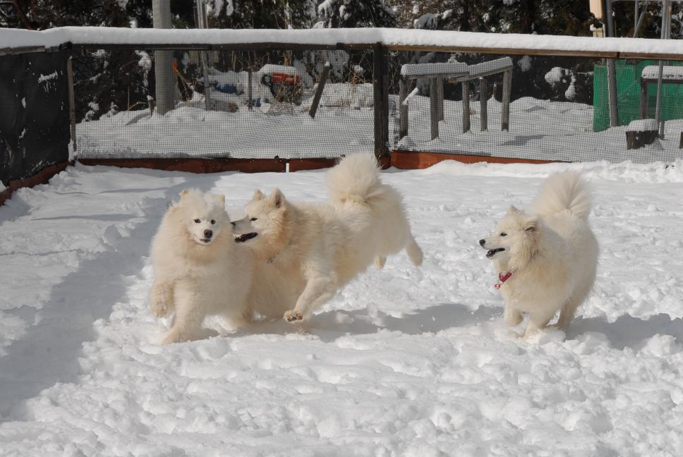 雪解け&大雪オフ  大雪編_a0049296_5285199.jpg