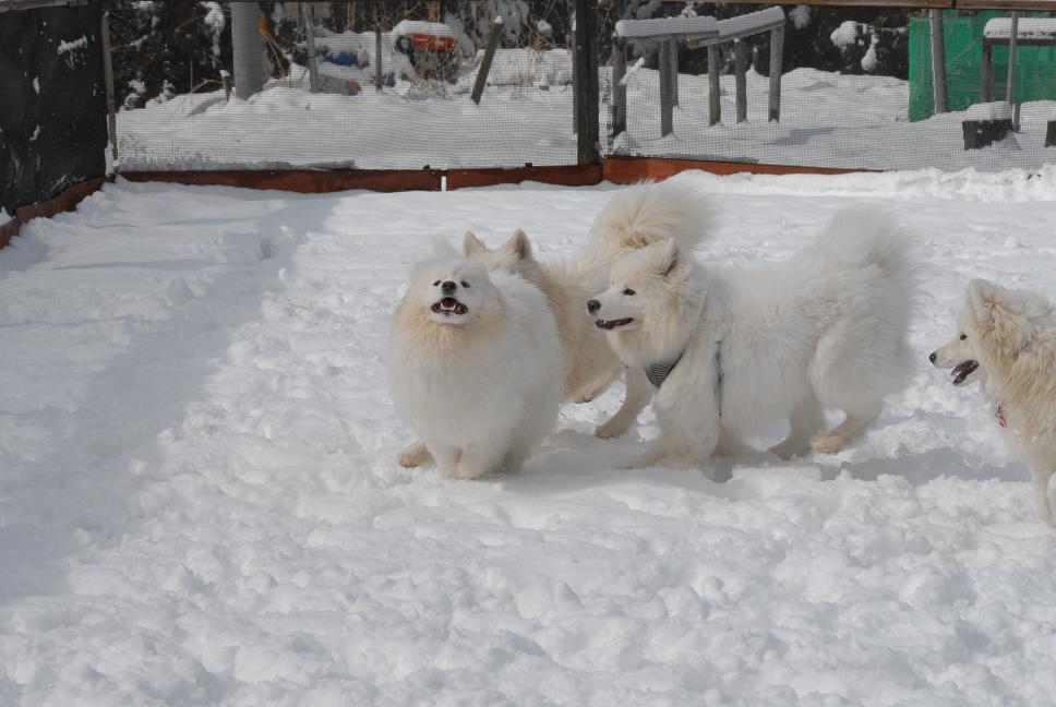 雪解け&大雪オフ  大雪編_a0049296_529868.jpg