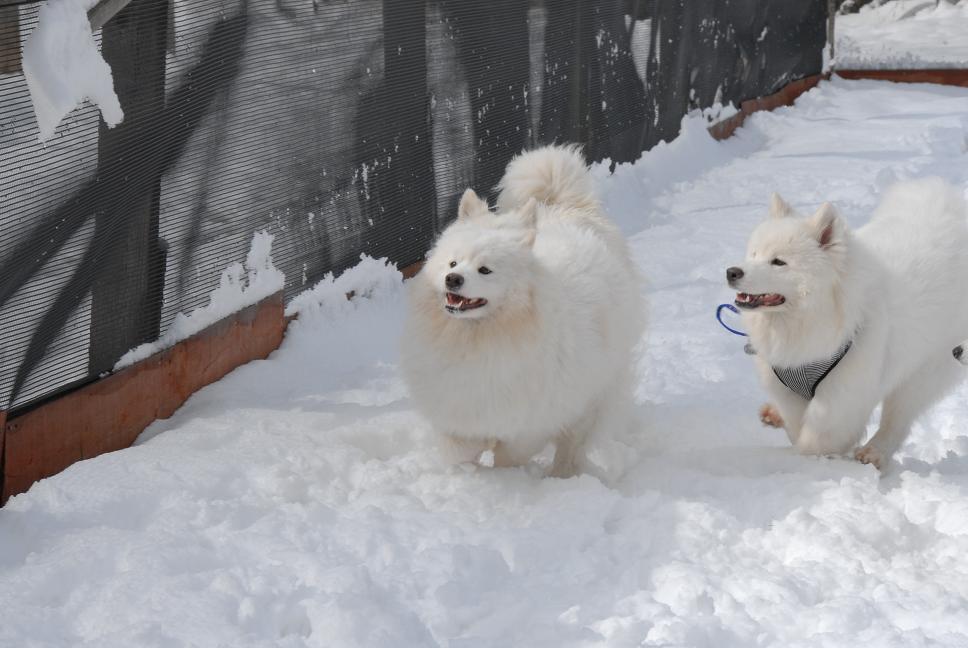 雪解け&大雪オフ  大雪編_a0049296_5304434.jpg
