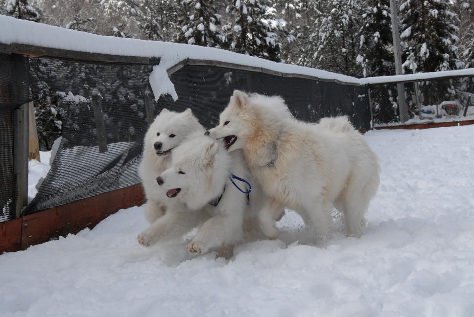 雪解け&大雪オフ  大雪編_a0049296_5314064.jpg
