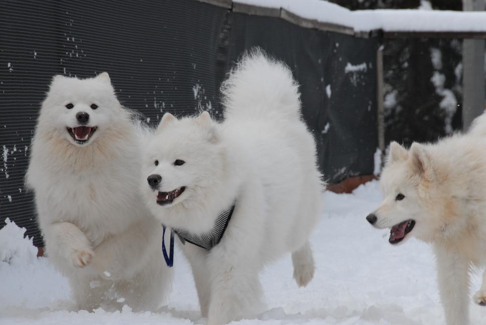 雪解け&大雪オフ  大雪編_a0049296_5322437.jpg