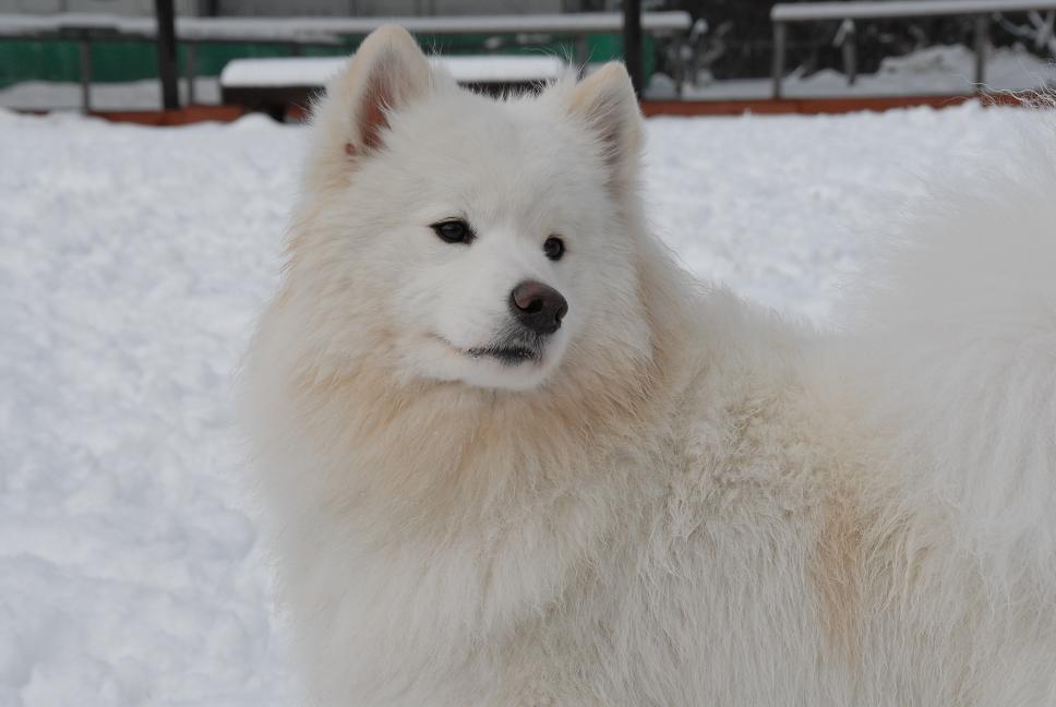 雪解け&大雪オフ  大雪編_a0049296_5325221.jpg