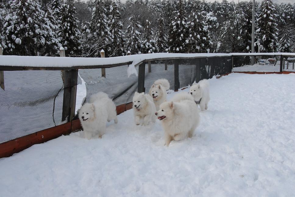 雪解け&大雪オフ  大雪編_a0049296_5332862.jpg