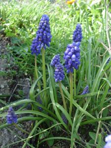 戻ったら春でした_f0106597_23244074.jpg