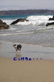 f0110199_226466.jpg