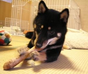 杏の新しいおもちゃ_f0068501_0254653.jpg