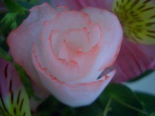 f0136109_2275491.jpg