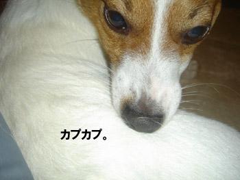 b0098652_013883.jpg