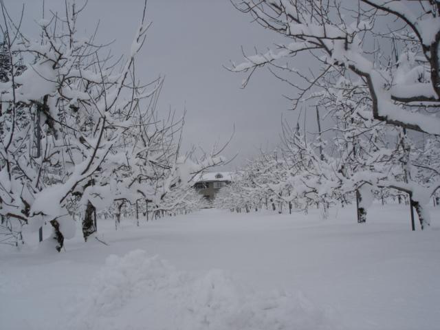 春の雪。_e0019167_840441.jpg