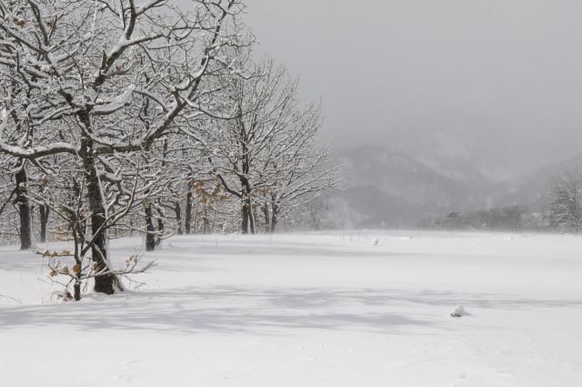 真っ白のゲレンデの左側には雪化粧した木々。奥の方は吹雪いているので少しボヤっとして見えます。木々の陰がゲレンデに写り、今回の風景の中でもお気に入りの一枚です。