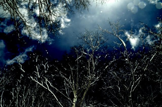 ゲレンデを渡る細い林道を見上げています。道の両端にある木の枝が空を塞ぎ眩しい光が差し込んで枝に付いた雪が風に舞っています。