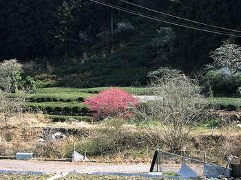 やっと春が・・・_c0107612_5594998.jpg