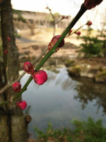 春よ来い。_e0084756_8513275.jpg