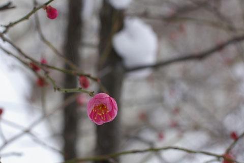 春よ来い。_e0084756_8522048.jpg