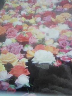 f0103158_2262130.jpg