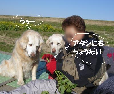 f0114893_7541261.jpg