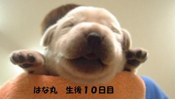 b0075609_226321.jpg