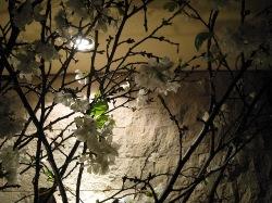 一足お先に夜桜見物!_d0091909_2085361.jpg