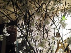 一足お先に夜桜見物!_d0091909_2093822.jpg