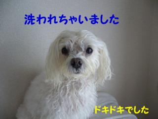 f0005727_1555515.jpg