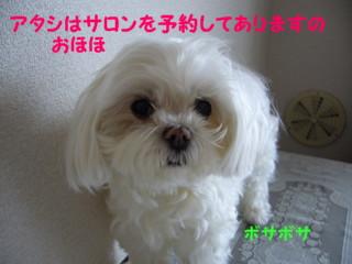 f0005727_1612560.jpg