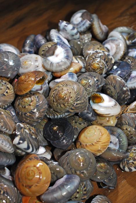 ながらみ/キサゴ......... 美味い貝ですよ!「塩茹で」が堪らん!_d0069838_1143322.jpg