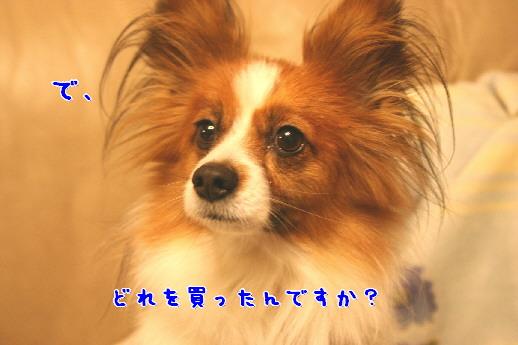 d0013149_1017324.jpg