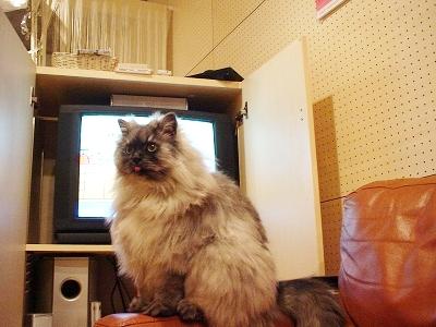 f0111467_1155376.jpg