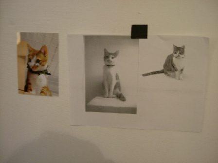 オークリーフ(猫のいるスタジオ)_f0049672_1323266.jpg