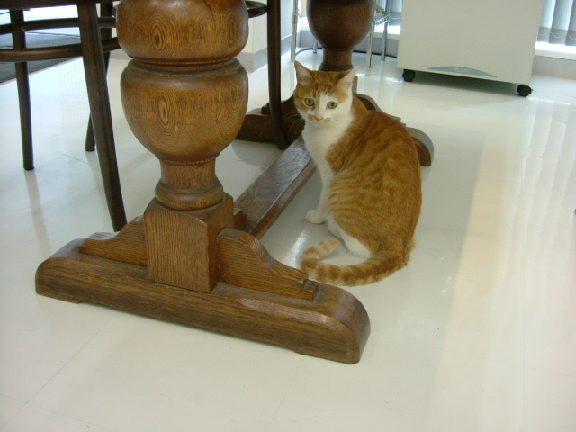 オークリーフ(猫のいるスタジオ)_f0049672_1324222.jpg