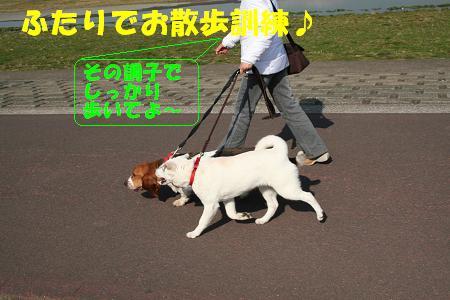 f0121712_1141832.jpg