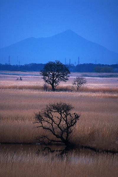 渡良瀬遊水地の葦焼き_b0010915_19222256.jpg