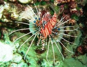 [ダイビング]海藻のようなモノの正体_a0043520_8173695.jpg