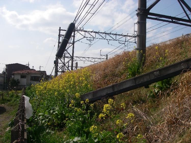 モクレン、菜の花、ジンチョウゲ_a0074069_15421856.jpg