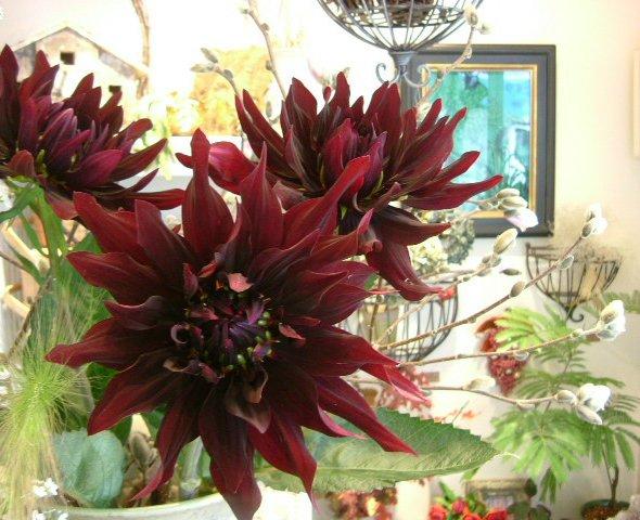 オークリーフ(深く美しい色の花)_f0049672_12101791.jpg