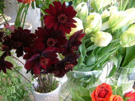 オークリーフ(深く美しい色の花)_f0049672_1285047.jpg