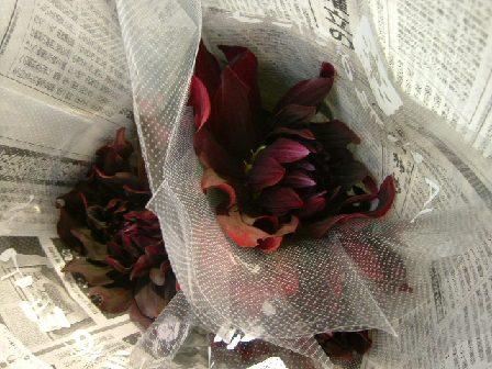 オークリーフ(深く美しい色の花)_f0049672_1292064.jpg