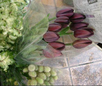 オークリーフ(深く美しい色の花)_f0049672_1294636.jpg