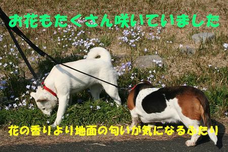 f0121712_16314588.jpg