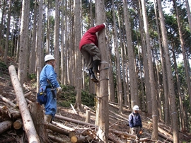 中学生の林業体験_e0002820_171262.jpg