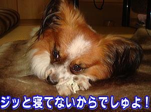 f0011845_22284673.jpg