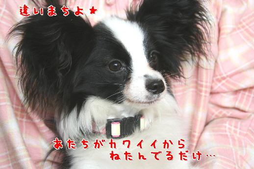 d0013149_16273094.jpg