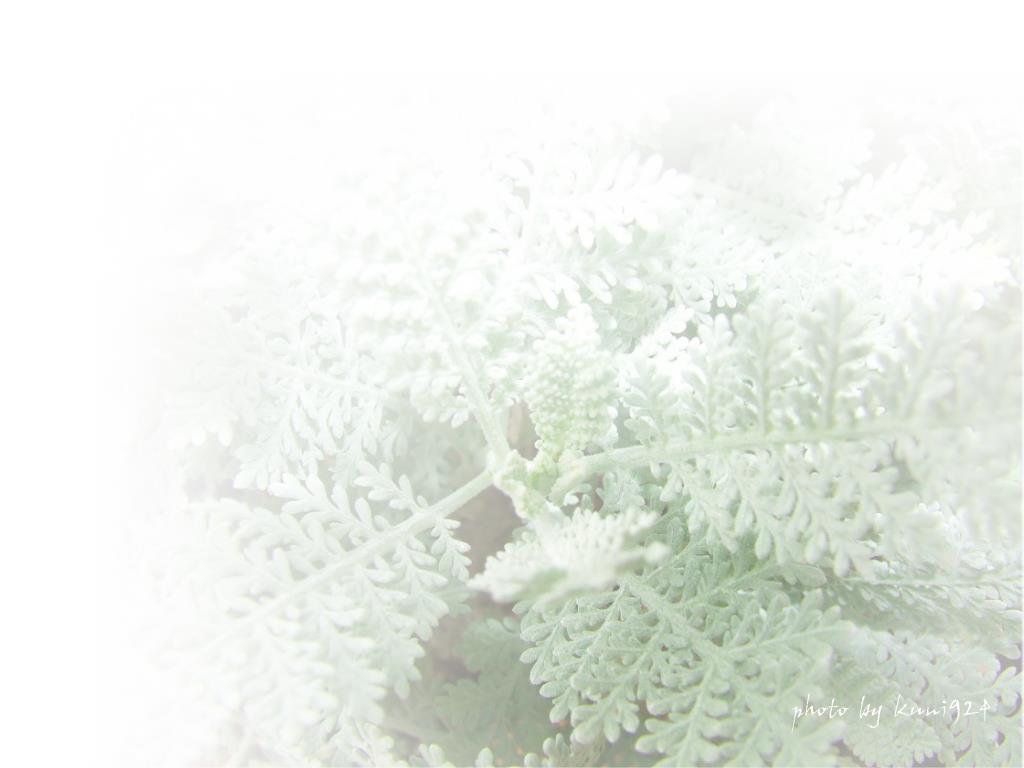 f0131365_1831994.jpg