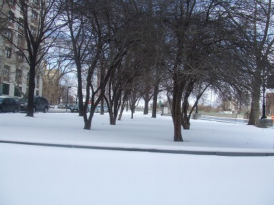 Brooklynの雪景色_b0093577_15284237.jpg