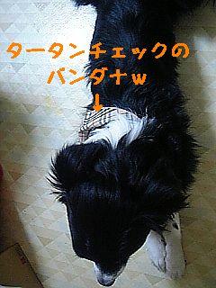e0038378_043730.jpg