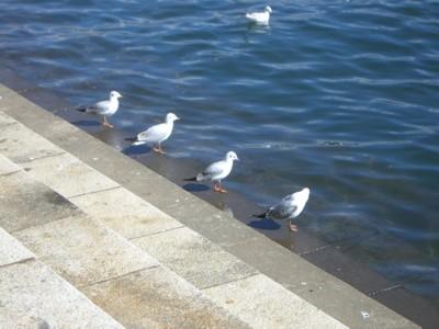 水鳥4兄弟_c0006826_21104411.jpg