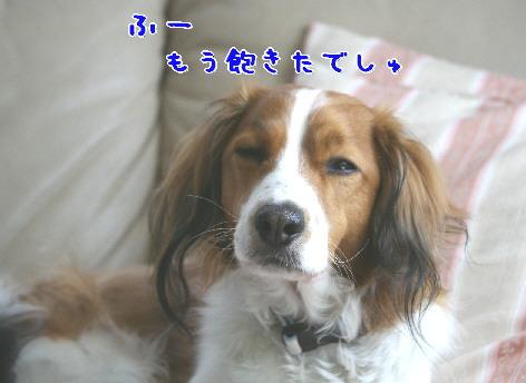 d0013149_17472543.jpg