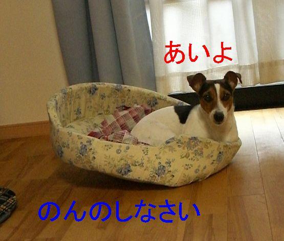 f0053952_12593279.jpg