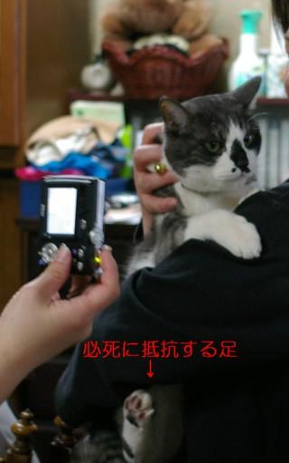 シマ助ちゃん、元気で、お幸せに_d0085254_2351910.jpg